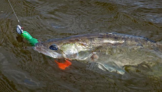 Рыбалка на судака в разные времена года.jpg