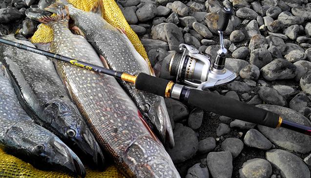 Какая рыба ловится в августе на спиннинг.jpg