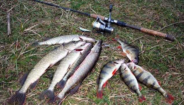 Какую рыбу можно в мае ловить на спиннинг.jpg