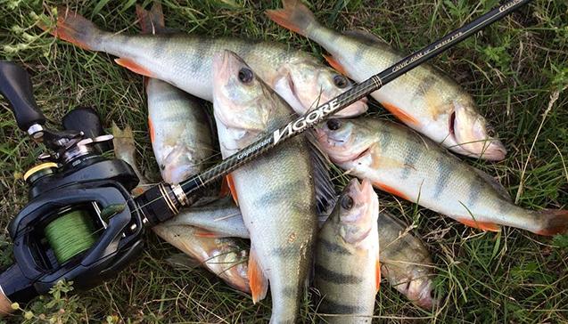Виды рыбы для лова на спиннинг весной.jpg